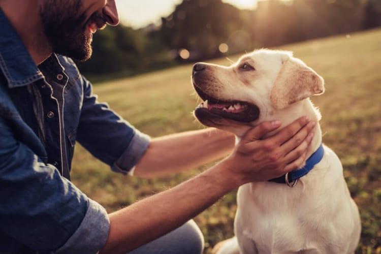 愛犬同伴型高級リゾートホテル「レジーナリゾート」初となるドッグフィットネス併設ホテルが鴨川市に7月2日開業。