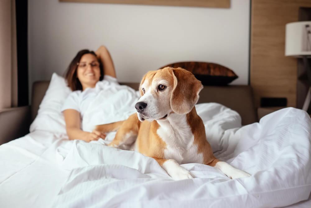 鳥取県の犬同伴型リゾートホテルが人気、ペット可宿泊施設や預かり施設の需要高まる