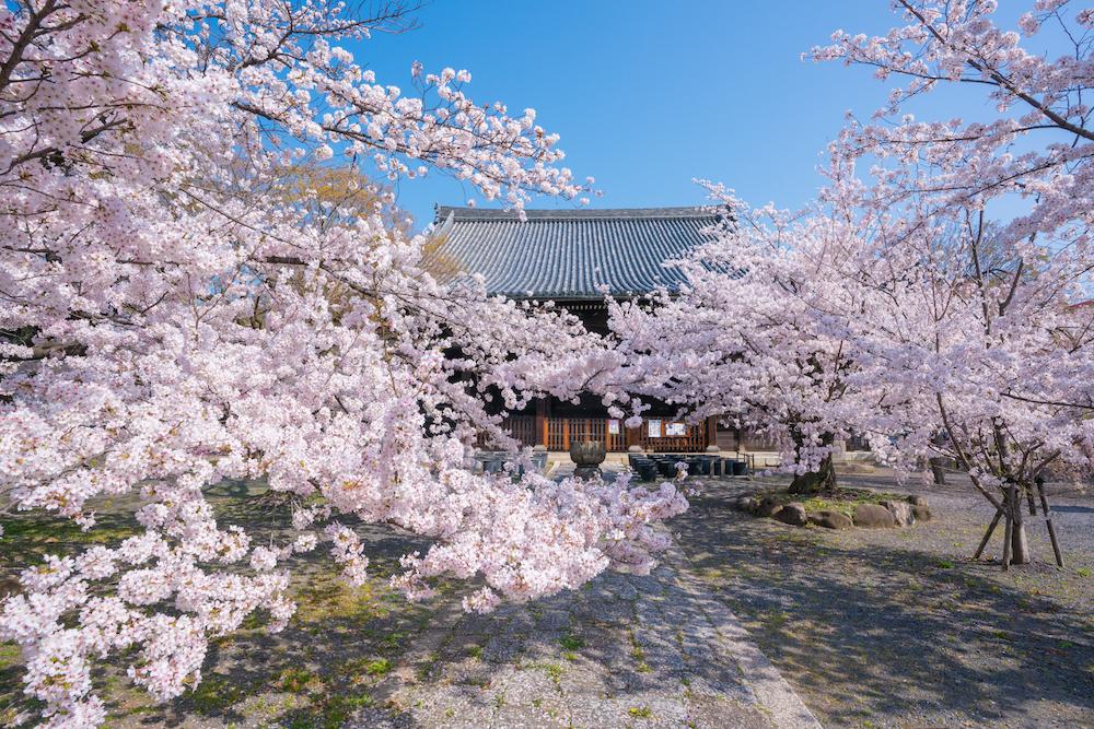ティ・エ・エス、京都の宿坊「立本寺 四神閣(りゅうほんじ ししんかく)」オープン、ReValue事業の立ち上げへ