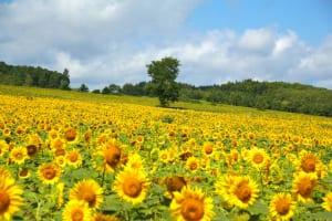 2019年夏のインバウンドに人気のエリアは北海道!Reluxトラベルラボが「インバウンド旅行動向調査」を発表