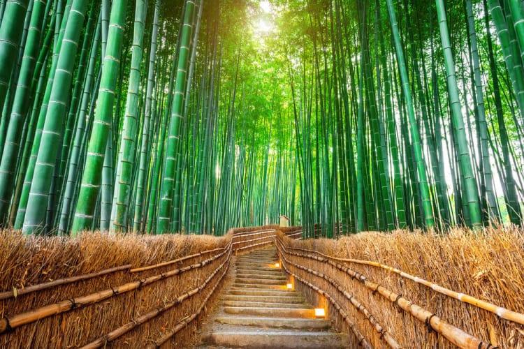 【新型コロナウイルス関連】京都の日本人観光客、半分まで回復!!