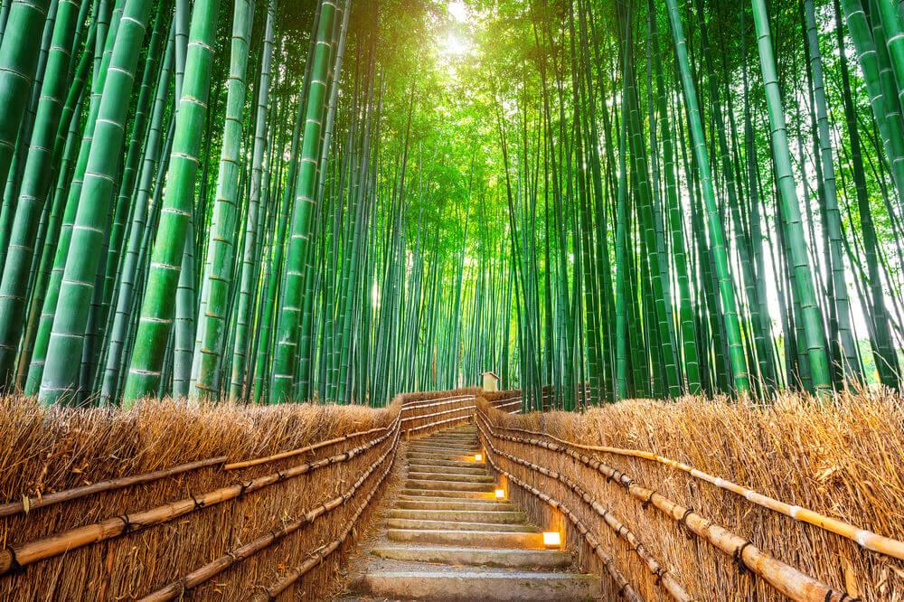 竹の持つ美しさを配した観光型スモールラグジュアリーホテル「THE JUNEI HOTEL 京都」2020年3月開業