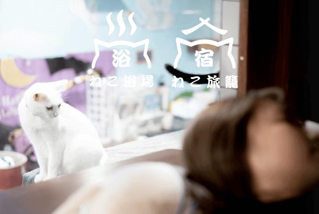 保護猫カフェ併設ホテル「ねこ浴場&ねこ旅籠」大阪・長堀橋に開業、収益は猫のご飯代や医療費に