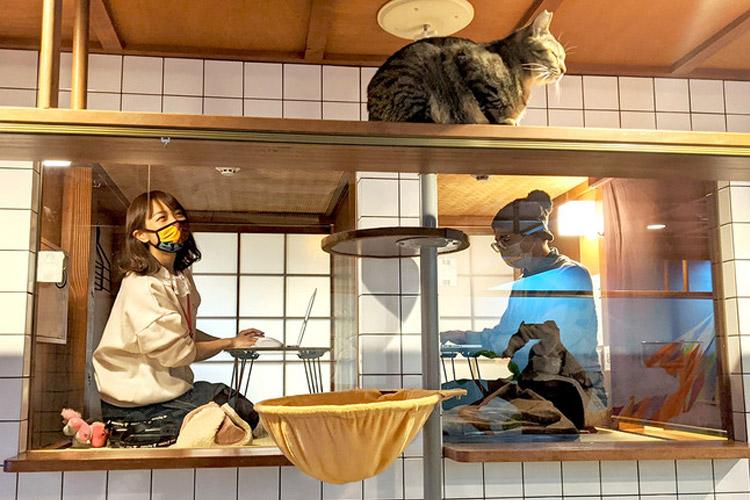 【猫旅籠】保護猫をまったり愛でながらテレワークできる、猫と泊まれるホテルが新サービス開始